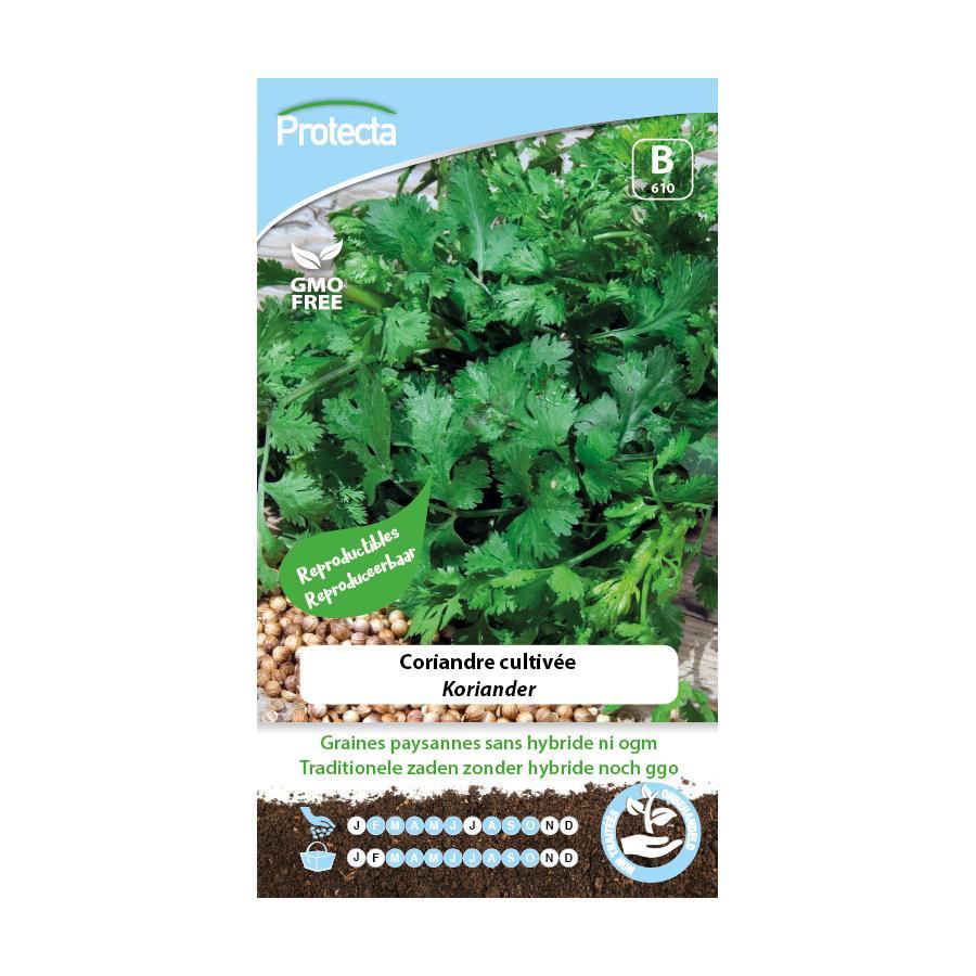 Protecta - Graines paysannes Coriandre Cultivée