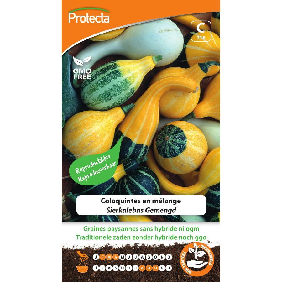 Protecta - Graines paysannes Coloquintes en mélange