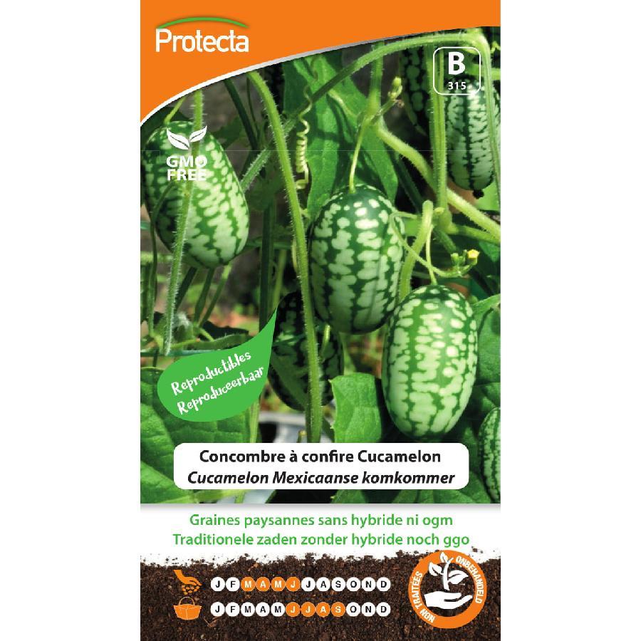 Protecta - Graines paysannes Concombre à confire Cucamelon