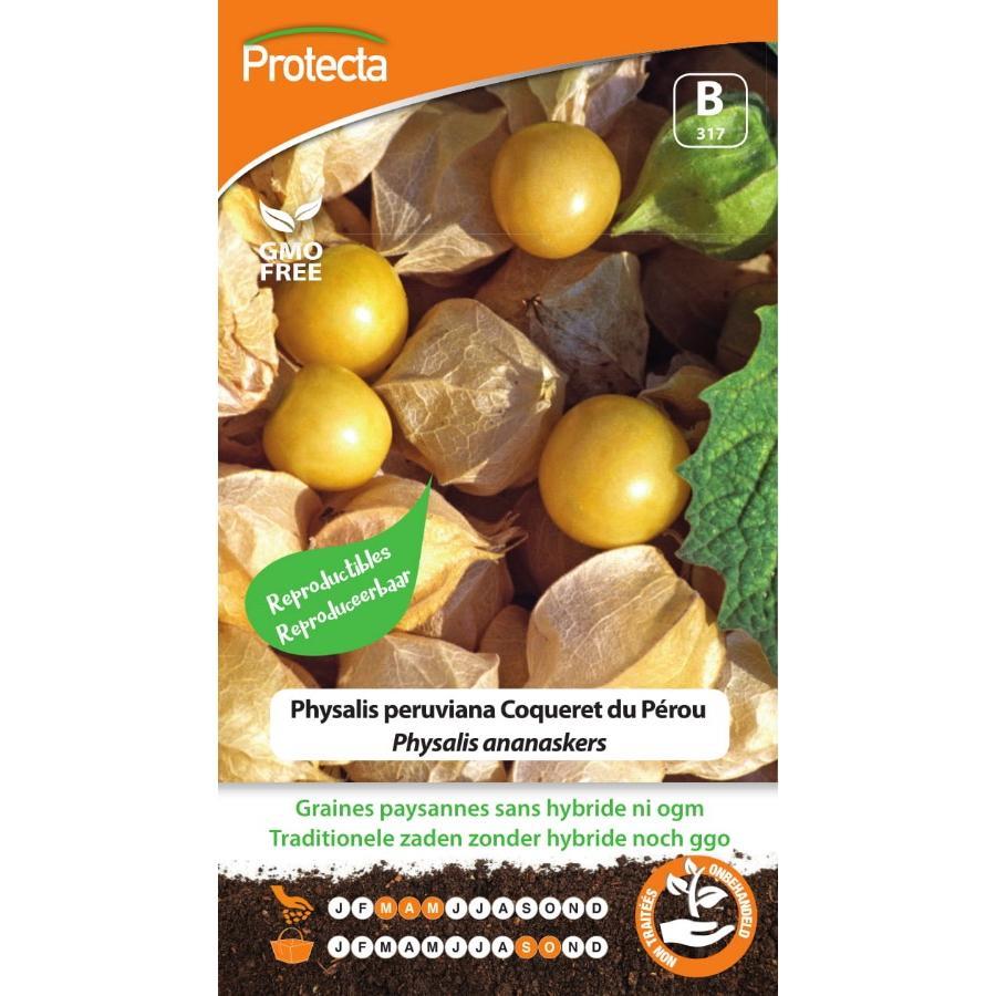 Protecta - Graines paysannes Physalis peruviana Coqueret du Pérou