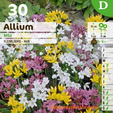 Ail d'ornement - Allium mix couvrant