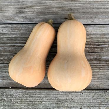 Courge musquée butternut AB