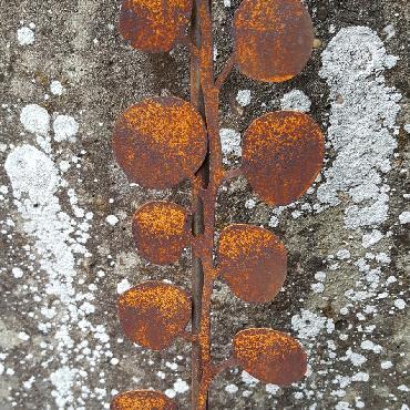 Petites feuilles de Muehlenbeckia à piquer en fer rouillé