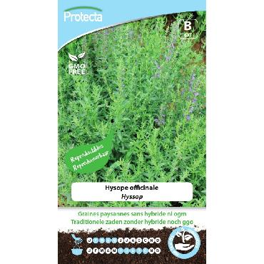 Protecta - Graines paysannes Hysope Officinale