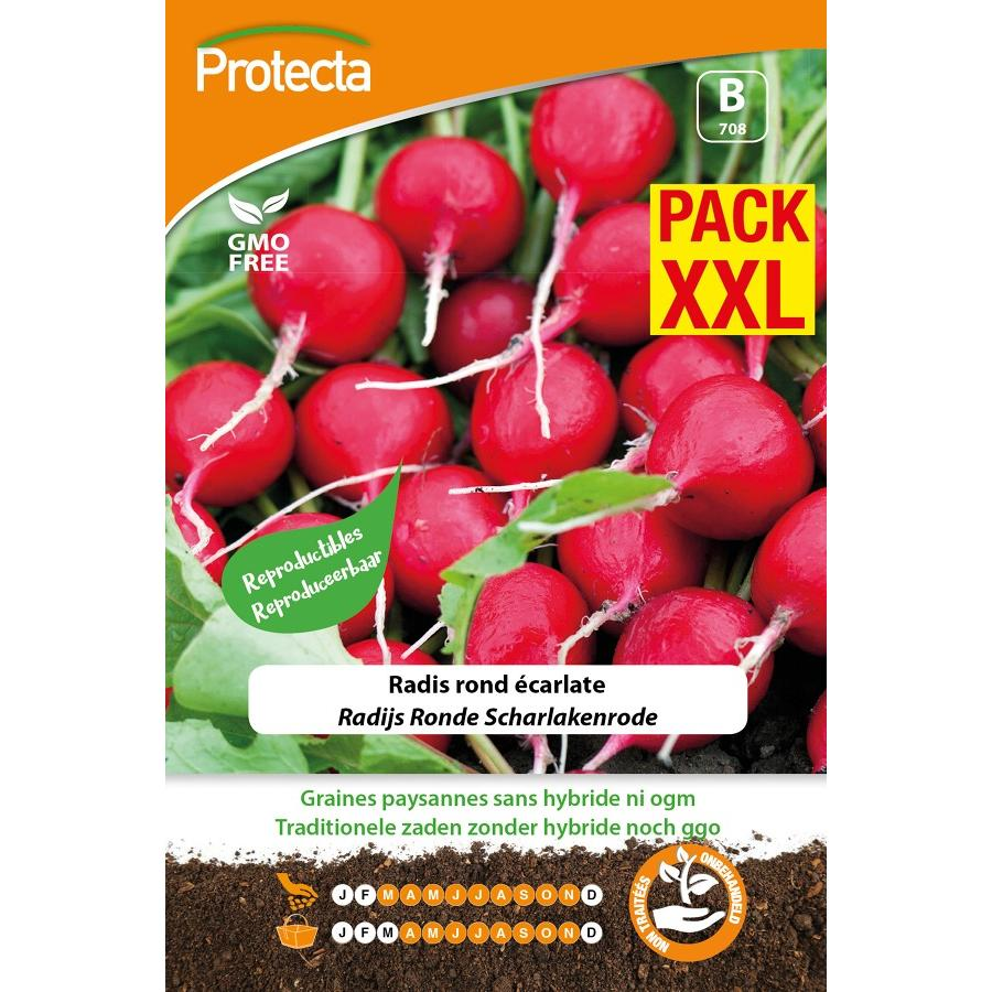 Protecta - Graines paysannes Radis Rond Écarlate XXL