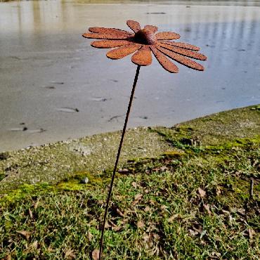 Fleur grande pâquerette D23xH93cm à piquer en fer rouillé