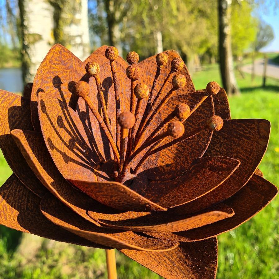Fleur astrantia D20xH147cm à piquer en fer rouillé