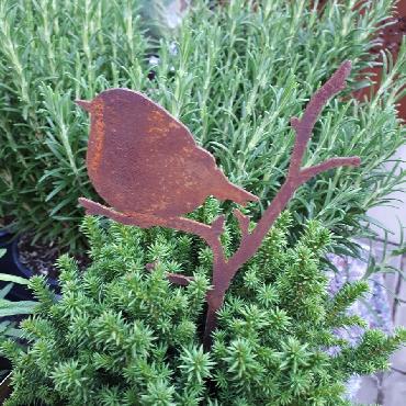 Oiseau petit sur branche avec pique