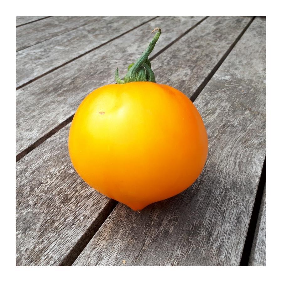 Tomate Teton de Wépion