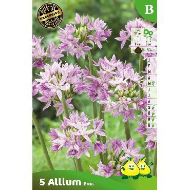 Ail d'ornement - Allium Eros (Allium Unifolium Eros)