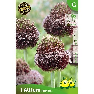 Ail d'ornement - Allium Forelock