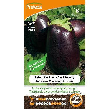 Aubergine Ronde Black Beauty