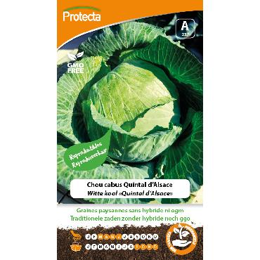 Protecta - Graines paysannes Chou Cabus Quintal D'Alsace