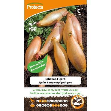 Protecta - Graines paysannes Echalion Figaro