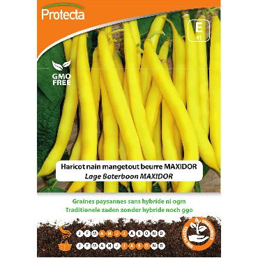 Protecta - Graines paysannes Haricot Nain Mangetout Beurre MAXIDOR