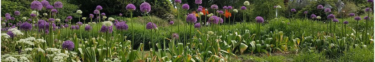 Associated plants
