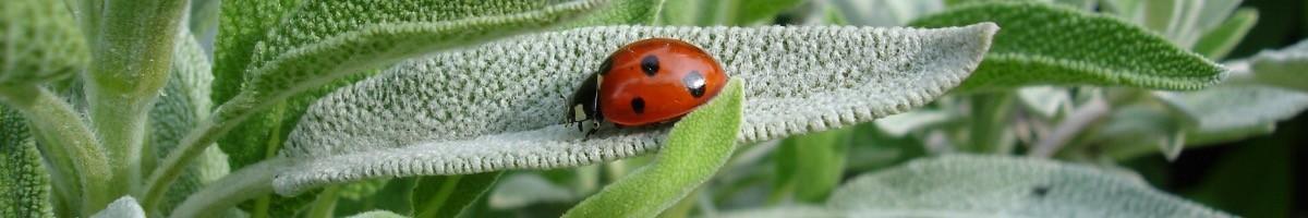 Lutte contre les insectes, les pucerons, les cochenilles et les parasites sur les plantes