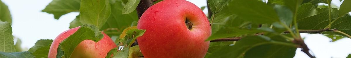 Jardiner sainement et de manière écologique