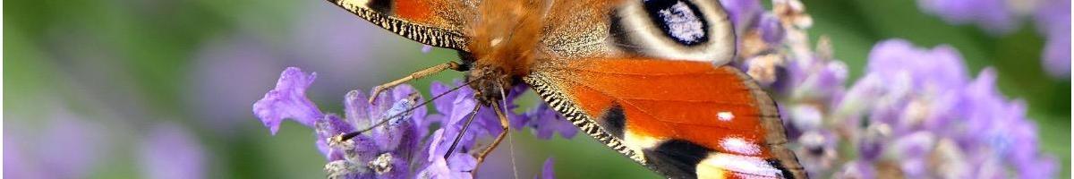 Améliorez la biodiversité dans votre jardin avec les produits ECOstyle, Protecta, Purtica et PUR VER