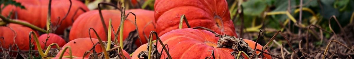 ECOstyle : Jardinage sain et écologique
