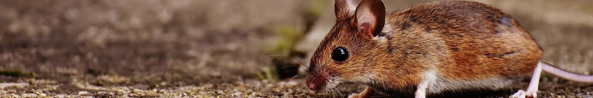 Répulsifs à ultrasons ECOstyle contre souris et rats, chiens et chats, fouines, taupes, araignées et moustiques