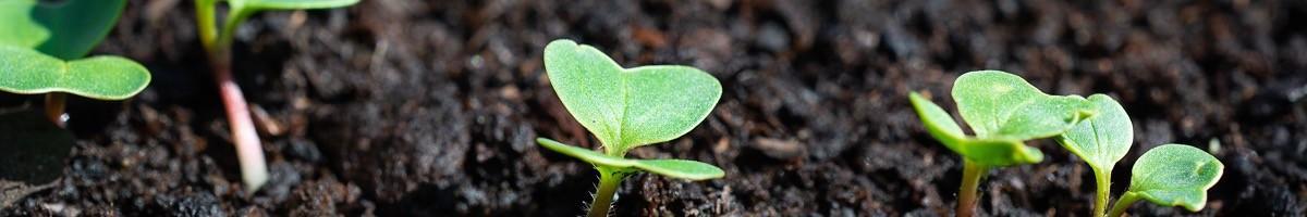 Soil of organic plantation