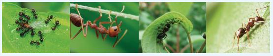 Lutter contre les fourmis