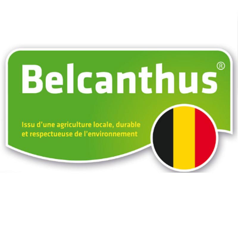 Belcanthus